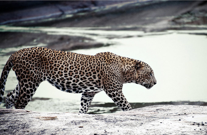 animal-photography
