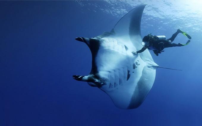 underwater-photography6