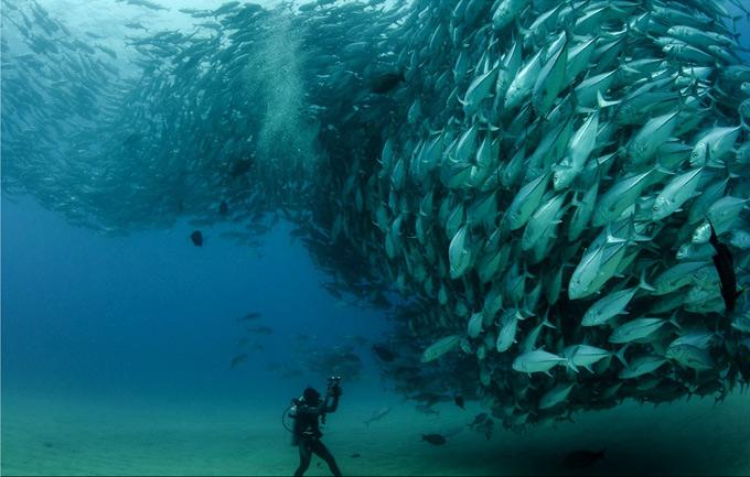 underwater-photography7