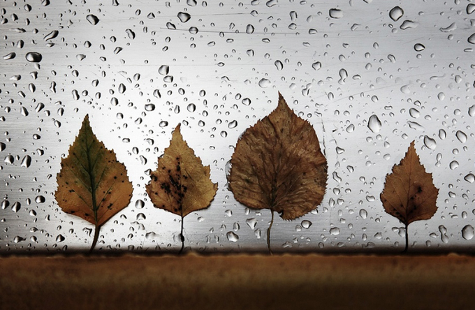 still-life-photography
