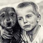 pet-photography