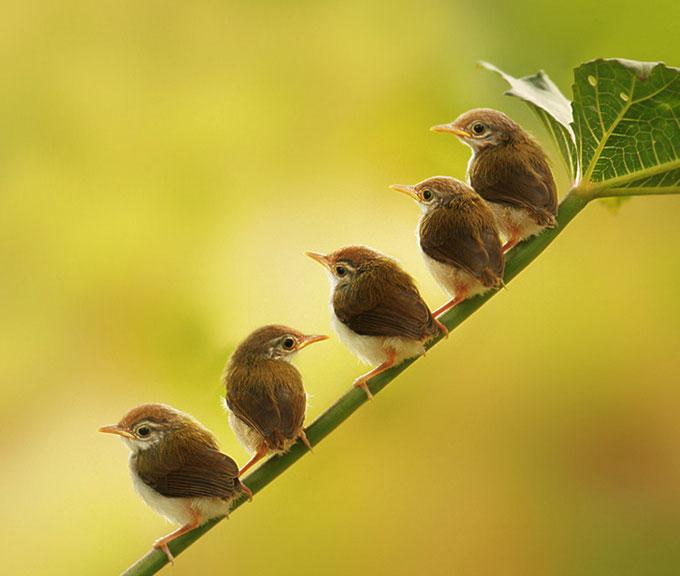 Bird-Photography